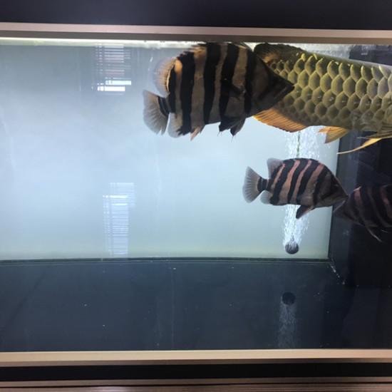 眼睛有点坏了 观赏鱼常见疾病 南通水族批发市场第4张
