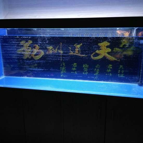 #小绵羊·大气量#碰碰运气,正好缺个气泵[ciya] 观赏鱼常见疾病 南通水族批发市场第1张