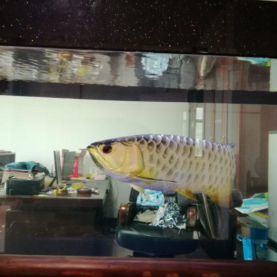 #降温吧!鱼缸#鱼缸夏天达到32度了。。。。打开柜门,关灯。。。加风扇空调过夜。 观赏鱼常见疾病 南通水族批发市场第7张