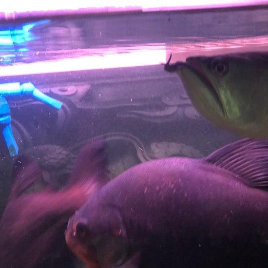 南通最大鱼缸今天改善生活 观赏鱼常见疾病 南通水族批发市场第3张