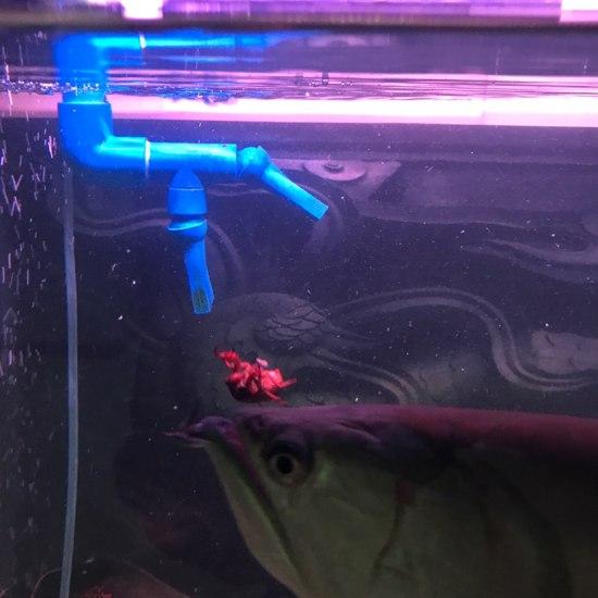 南通最大鱼缸今天改善生活 观赏鱼常见疾病 南通水族批发市场第8张