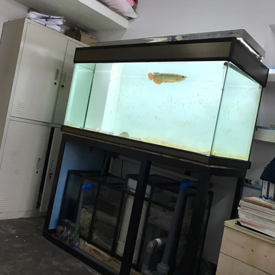 这缸脏的,实在看不下去了! 观赏鱼常见疾病