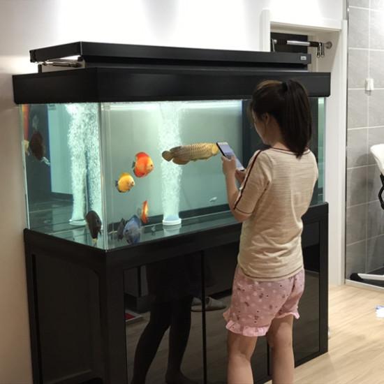 好和谐 观赏鱼常见疾病 南通水族批发市场第2张