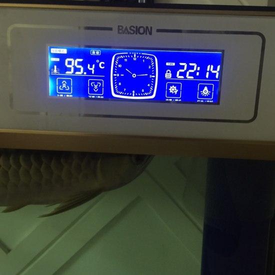 就这温度可以吧[fanu]#高温需要降温吗?# 观赏鱼常见疾病