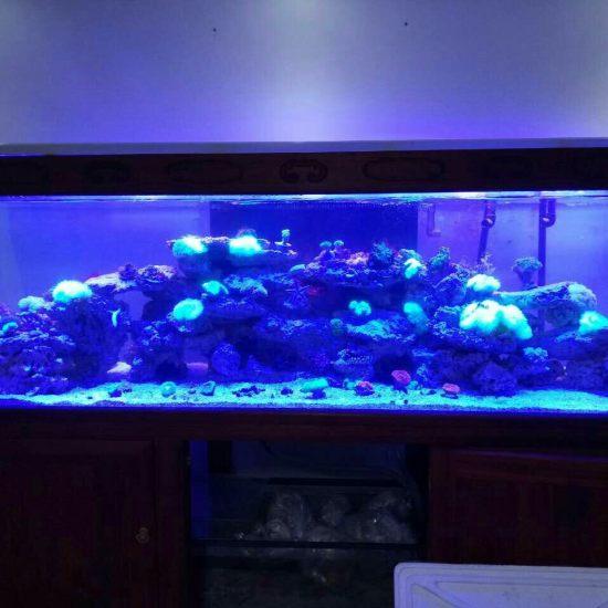 两万多珊瑚放进去真不显多[kelian] 观赏鱼常见疾病 南通水族批发市场第1张