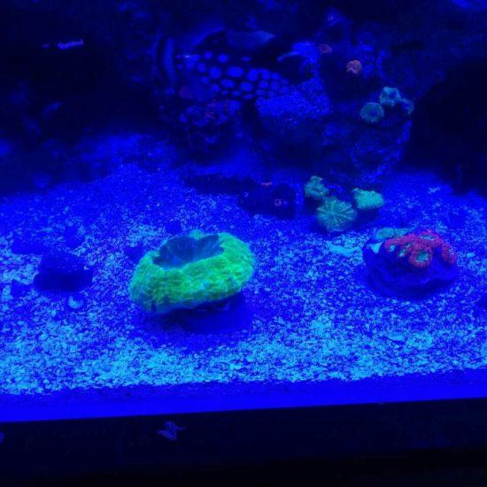 两万多珊瑚放进去真不显多[kelian] 观赏鱼常见疾病 南通水族批发市场第2张