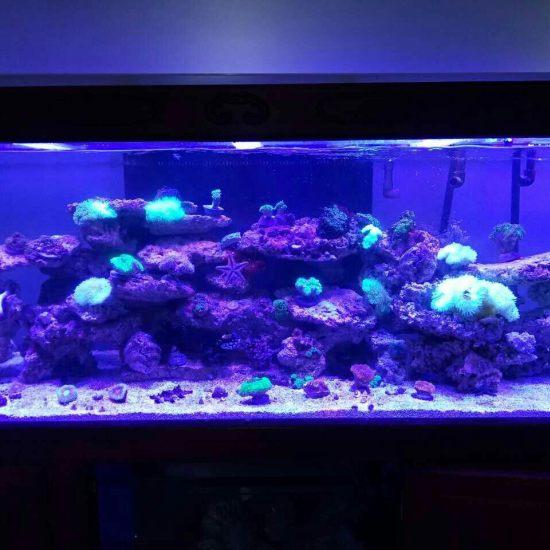 两万多珊瑚放进去真不显多[kelian] 观赏鱼常见疾病 南通水族批发市场第4张