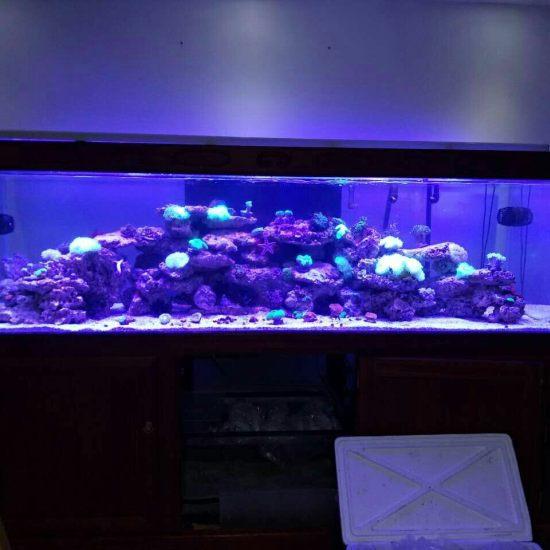 两万多珊瑚放进去真不显多[kelian] 观赏鱼常见疾病 南通水族批发市场第5张