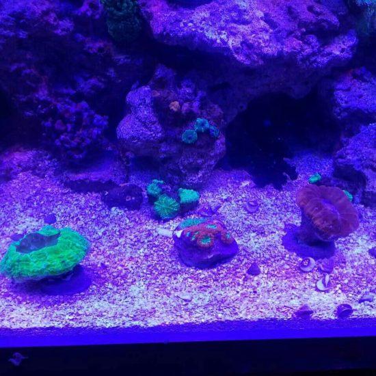 两万多珊瑚放进去真不显多[kelian] 观赏鱼常见疾病 南通水族批发市场第7张