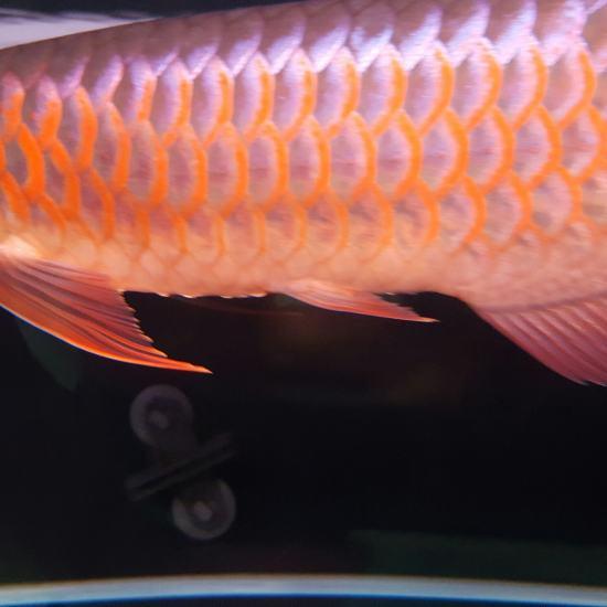 厚与面积南通最大鱼缸 观赏鱼常见疾病 南通水族批发市场第1张