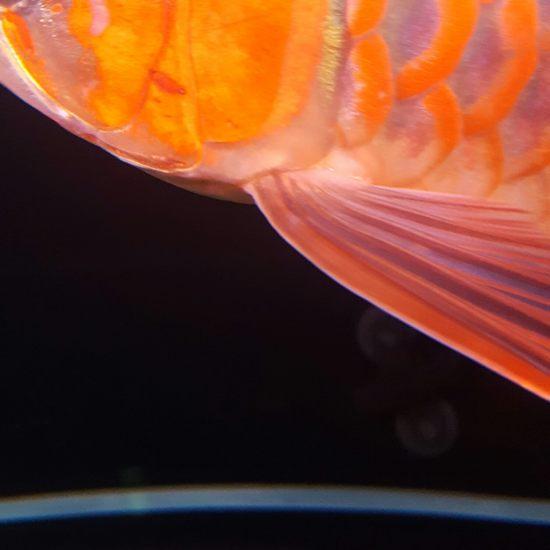 厚与面积南通最大鱼缸 观赏鱼常见疾病 南通水族批发市场第2张