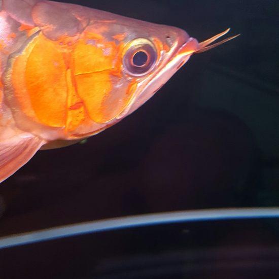 厚与面积南通最大鱼缸 观赏鱼常见疾病 南通水族批发市场第3张