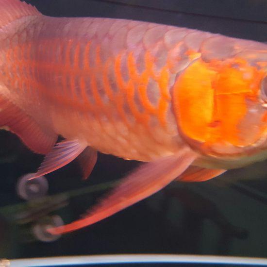 厚与面积南通最大鱼缸 观赏鱼常见疾病 南通水族批发市场第4张