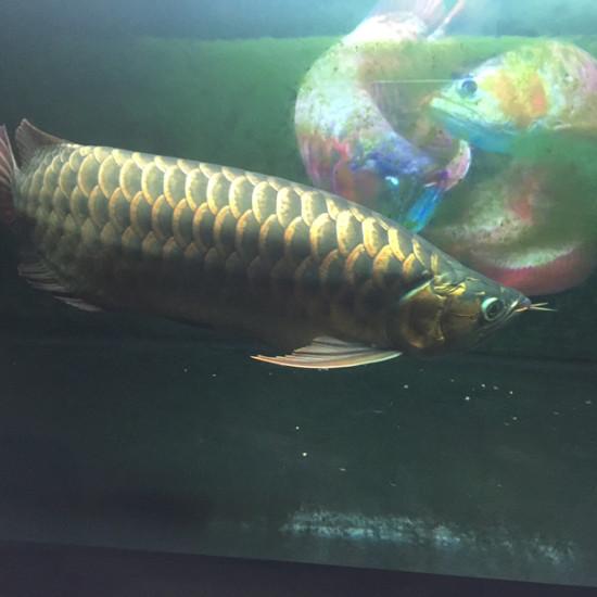 有没肇庆的鱼友? 观赏鱼常见疾病 南通水族批发市场第1张