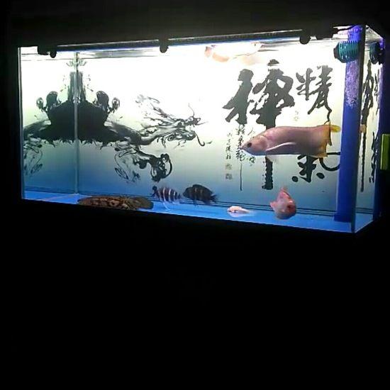 #打鱼#混养,打吧 观赏鱼常见疾病 南通水族批发市场第2张