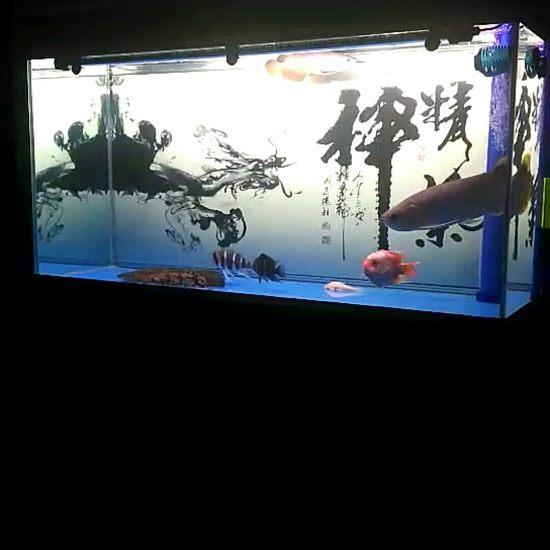 #打鱼#混养,打吧 观赏鱼常见疾病 南通水族批发市场第3张