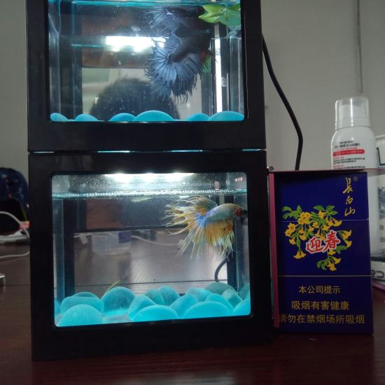#绚烂灯火##斗鱼#我还有这两个小家伙[se] 观赏鱼常见疾病 南通水族批发市场第7张