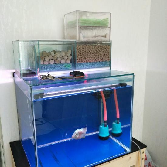 60.50.50缸 双层干湿分离 滤材是ac中空球和ac3d益菌屋。从当初5厘米 观赏鱼常见疾病 南通水族批发市场第1张
