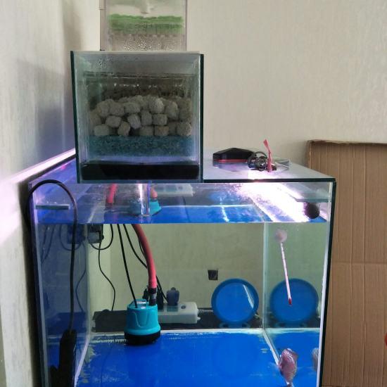 60.50.50缸 双层干湿分离 滤材是ac中空球和ac3d益菌屋。从当初5厘米 观赏鱼常见疾病 南通水族批发市场第2张