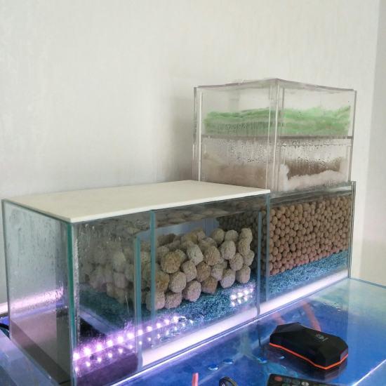60.50.50缸 双层干湿分离 滤材是ac中空球和ac3d益菌屋。从当初5厘米 观赏鱼常见疾病 南通水族批发市场第4张