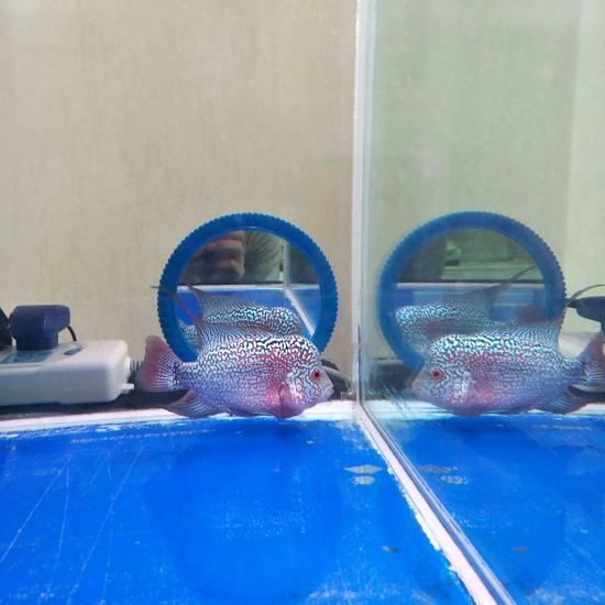 60.50.50缸 双层干湿分离 滤材是ac中空球和ac3d益菌屋。从当初5厘米 观赏鱼常见疾病 南通水族批发市场第9张