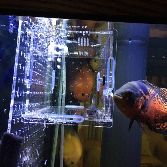 放任龍魚自助餐一星期後 實在忍不住要把飼料魚單獨關起來 不想單獨浪費一個缸 最後 观赏鱼常见疾病 南通水族批发市场第5张