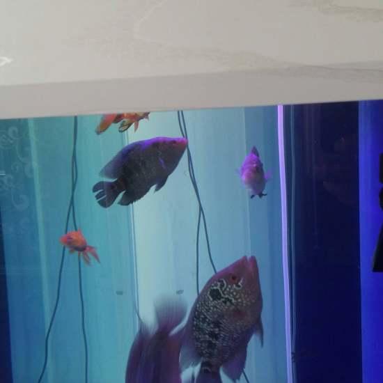 #绚烂灯火#我的鱼缸灯确实很烂啊,真希望这次活动能中,咱也体验下好的灯光带来漂亮 观赏鱼常见疾病 南通水族批发市场第3张