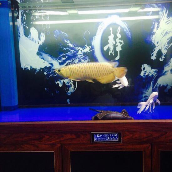 美不,值多少大洋。 观赏鱼常见疾病 南通水族批发市场第5张