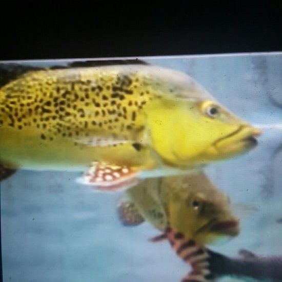 回忆过去 观赏鱼常见疾病 南通水族批发市场第2张