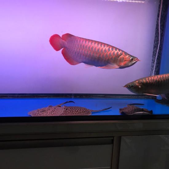 天气热鱼褪色厉害…… 观赏鱼常见疾病 南通水族批发市场第6张