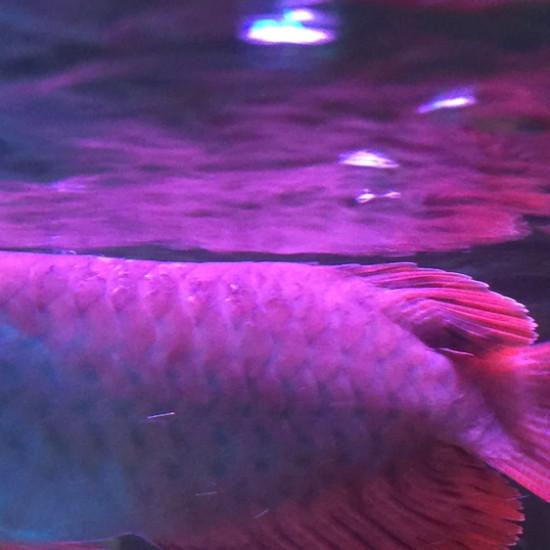 谁能告诉我这鱼的鳞发生什么问题了吗?求高手指导…[peifu]