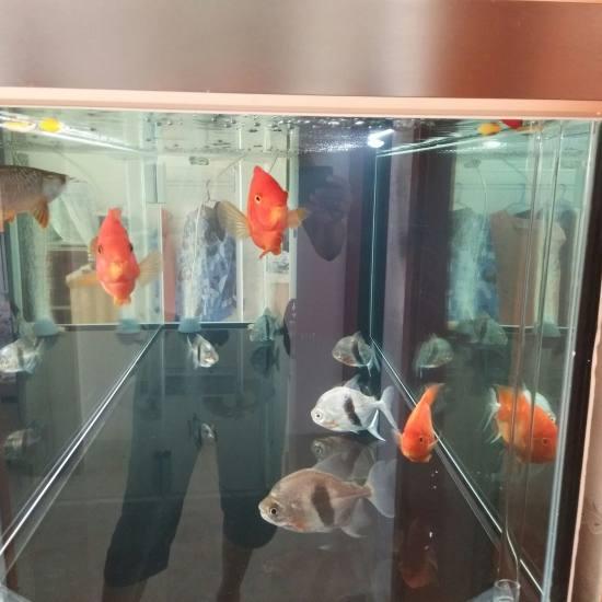 南通金龙过背恢复兰! 观赏鱼常见疾病 南通水族批发市场第2张