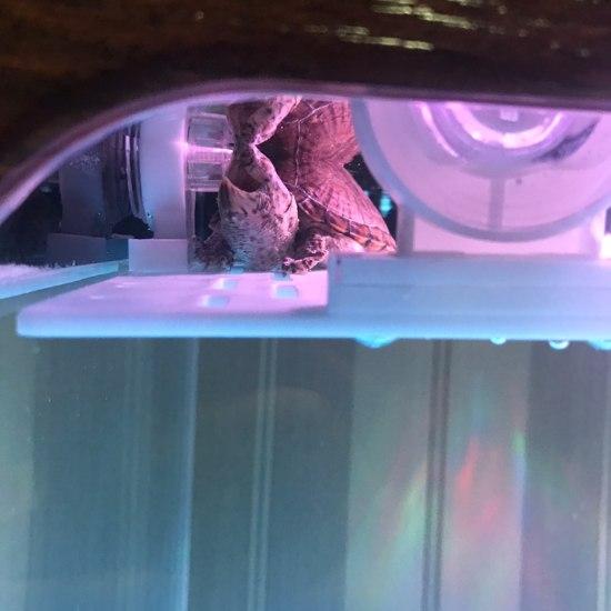 我家剃刀的睡姿太销魂 观赏鱼常见疾病 南通水族批发市场第2张