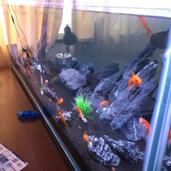 刚刚自己瞎弄的缸 观赏鱼常见疾病 南通水族批发市场第4张