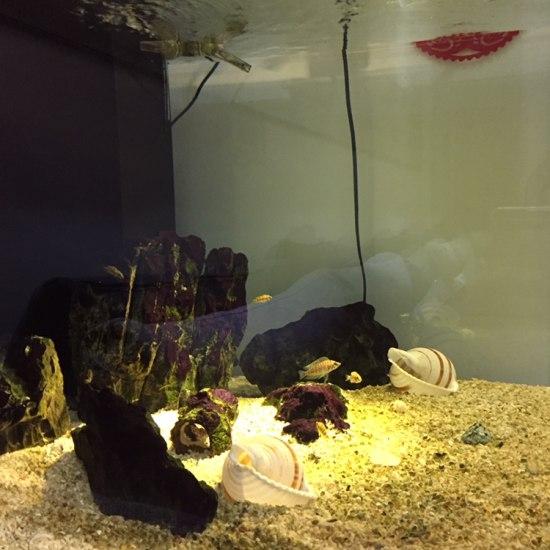 三湖虎鱼用什么灯光好,之前用白蓝led感觉光太亮,鱼有点害怕,求大神推荐一款灯 观赏鱼常见疾病
