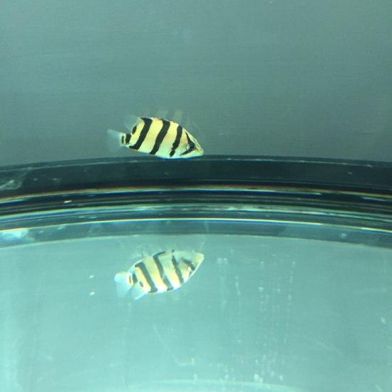 除了你,缸里就40条霓虹灯了,将来可怎么改口!!! 观赏鱼常见疾病 南通水族批发市场第1张