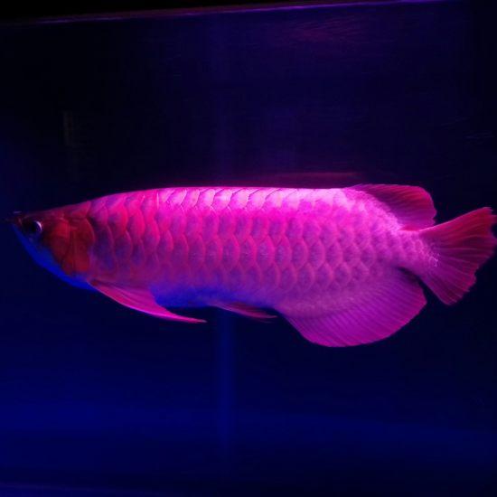 南通水族馆鱼缸还是蛮喜欢的