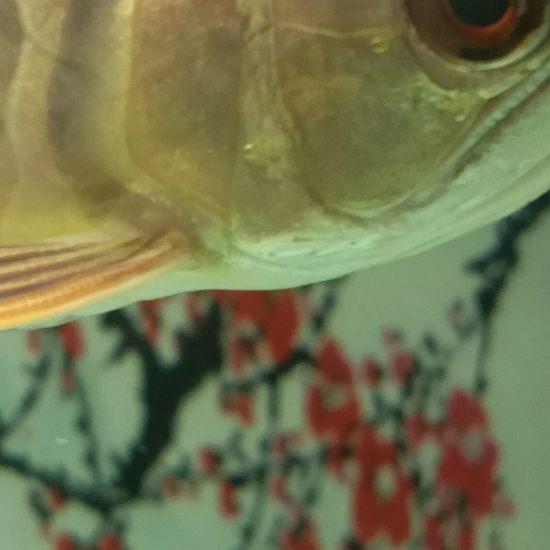 大神看看我这鱼眼有毛病没