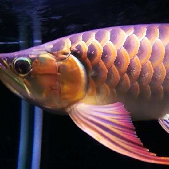 晚安,我的小三无[shuijiao] 观赏鱼常见疾病 南通水族批发市场第1张