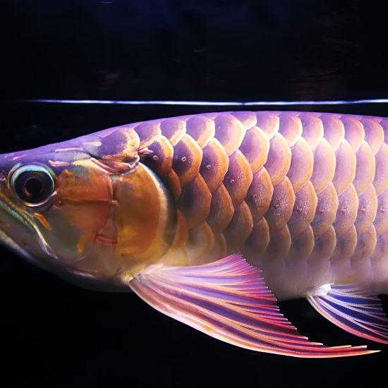 晚安,我的小三无[shuijiao] 观赏鱼常见疾病 南通水族批发市场第3张