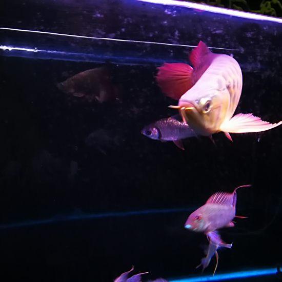 晚安,我的小三无[shuijiao] 观赏鱼常见疾病 南通水族批发市场第5张