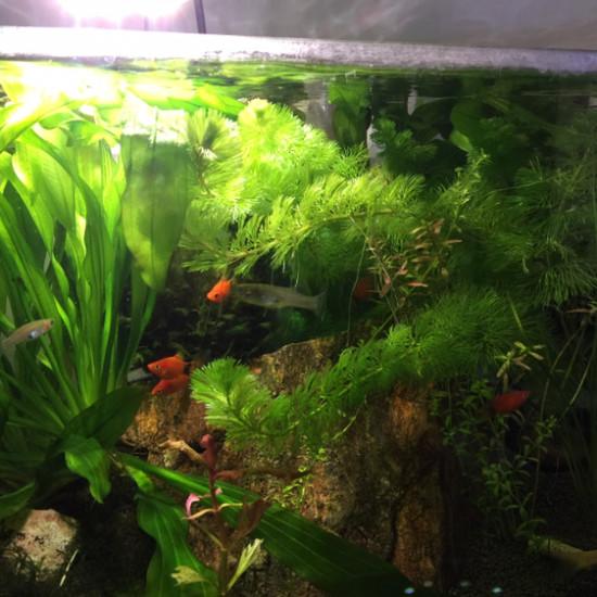 第三草缸 观赏鱼常见疾病 南通水族批发市场第2张