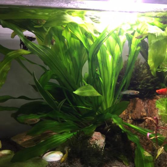 第三草缸 观赏鱼常见疾病 南通水族批发市场第4张