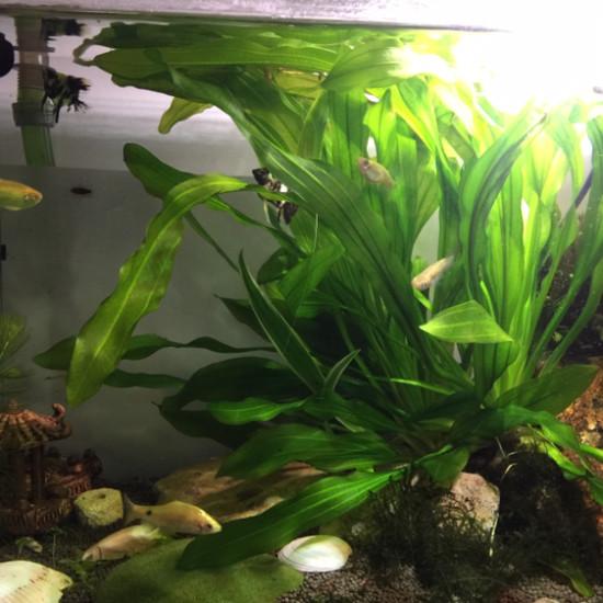 第三草缸 观赏鱼常见疾病 南通水族批发市场第5张