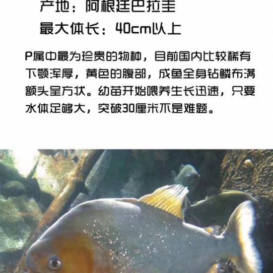 为啥动不动就让删帖了。 观赏鱼常见疾病 南通龙鱼第1张