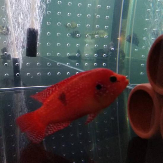 是不是美颜了啊,这么红南通鱼缸定做定制