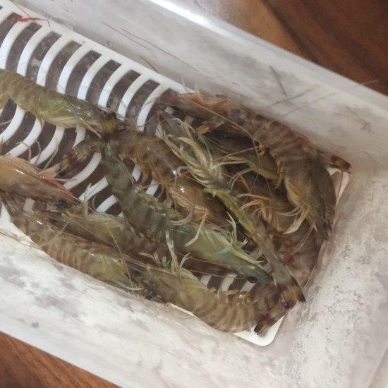 活基围虾[guzhang]吃点好东西 观赏鱼常见疾病 南通水族批发市场第4张