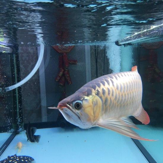 求大神啊,龙鱼标记位置对称开裂 巴西亚混身白毛加蒙眼 怎么办怎么办 天津龙鱼论坛 天津龙鱼第5张