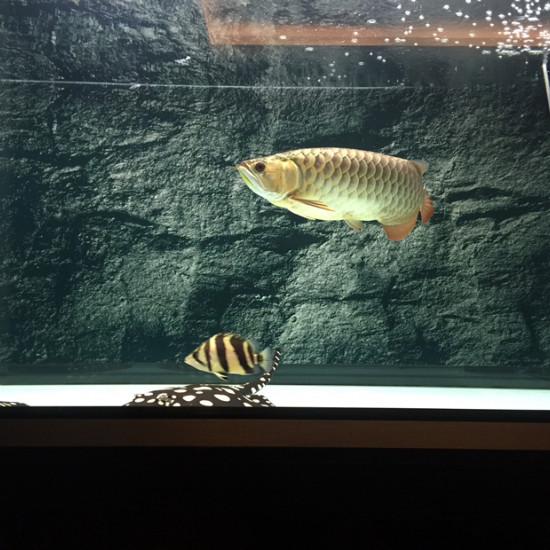 鱼缸34度龙不吃食了 天津龙鱼论坛 天津龙鱼第3张