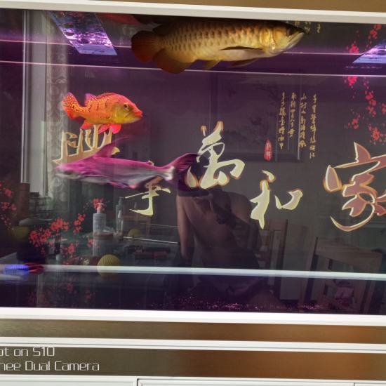 虽然不值钱,但是我喜欢。 天津龙鱼论坛 天津龙鱼第1张